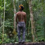 brasile processi distruzione amazzonia
